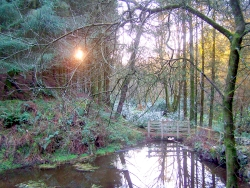 Glynllifon woodland