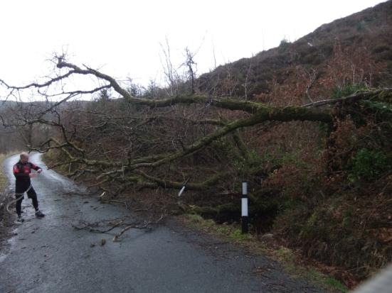 Gary battles a fallen tree