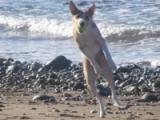 Nine Dog-Friendly Beaches ofSnowdonia
